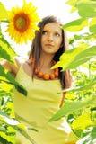 солнцецветы красотки Стоковые Фото