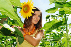 солнцецветы красотки Стоковая Фотография