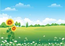 солнцецветы ландшафта Стоковое Изображение