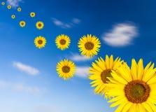 Солнцецветы летания Стоковое фото RF