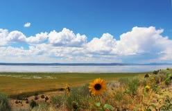 Солнцецветы перед озером Альбертом в Орегоне с пушистыми белыми облаками в голубом небе отражая на воде Стоковая Фотография RF