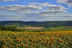 Солнцецветы поле и облачное небо стоковая фотография