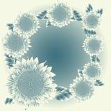 солнцецветы предпосылки Стоковое Изображение