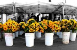 солнцецветы рынка Стоковая Фотография