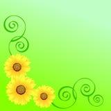 солнцецветы иллюстрация штока