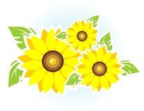 солнцецветы 3 Стоковые Изображения