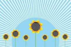 солнцецветы horizonta предпосылки Иллюстрация вектора