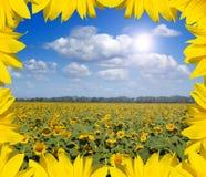 солнцецветы leafes ландшафта рамки Стоковое фото RF