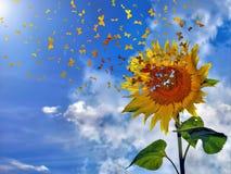 солнцецвет бабочек Стоковое фото RF