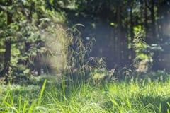 Солнцецвет в органической ферме Стоковые Изображения