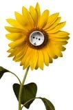 солнцецвет гнезда Стоковые Фотографии RF