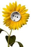 солнцецвет гнезда Стоковые Изображения RF