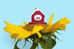 солнцецвет дома Стоковые Фото