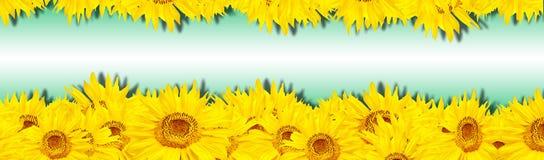 солнцецвет знамени Стоковое Фото