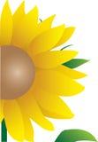 солнцецвет иллюстрации Стоковое Изображение RF