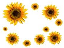 солнцецвет карточки Стоковое Изображение