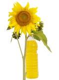 солнцецвет масла Стоковые Фотографии RF