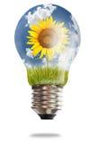 солнцецвет неочищенных рисов света шарика стоковое изображение rf