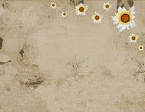солнцецвет пергамента рамки старый бесплатная иллюстрация