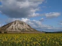 солнцецвет поля s Стоковая Фотография