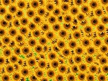 солнцецвет предпосылки грязный Стоковые Фото