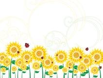 солнцецвет предпосылки Стоковые Изображения RF