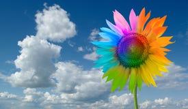 солнцецвет радуги Стоковые Изображения