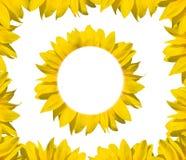 солнцецвет рамки Стоковые Изображения