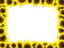 солнцецвет рамки Стоковая Фотография