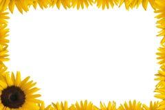 солнцецвет рамки Стоковые Изображения RF