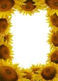 солнцецвет рамки Стоковая Фотография RF