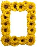 солнцецвет смолаы рамки Стоковая Фотография