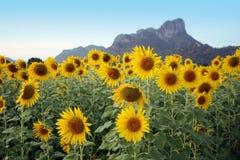 Солнцецвет с горой и небом Стоковая Фотография