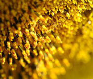 солнцецвет цветеня Стоковое Фото