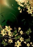 солнце бабочки луча Стоковое Изображение