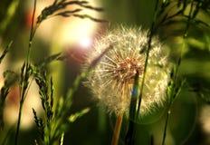 солнце весны заводов Стоковое Изображение