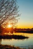 Солнце в ветвях дерева на речном береге Стоковая Фотография