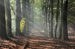 Солнце в пуще осени стоковая фотография rf
