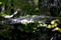 Солнце в сети паука стоковые фотографии rf