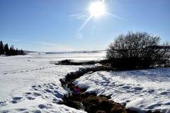 Солнце делает им немного грелку этот день зим Стоковые Фотографии RF