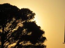 Солнце дерева стоковое фото rf