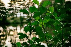Солнце, дерево, красивое, птица, горизонт, озеро, ландшафт, природа, Германия стоковые фото