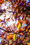 Солнце загораясь через ветви и листья дерева Стоковое Изображение RF