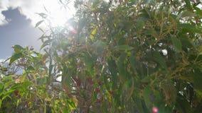 Солнце за деревьями видеоматериал