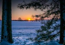 Солнце зимы над полями стоковое изображение rf