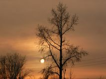 Солнце зрело стоковые фото