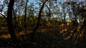 Солнце идет вниз с теней в дубе лес получает более темным ночь приходя видео Timelapse акции видеоматериалы