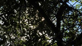 Солнце излучает блеск через ветви дерева на лете сток-видео