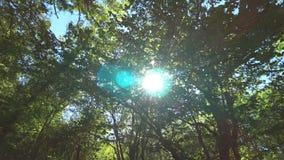 Солнце излучает выходящ сквозь отверстие ветви дерева сток-видео