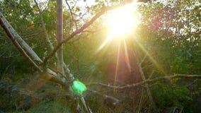 Солнце излучает природу леса акции видеоматериалы